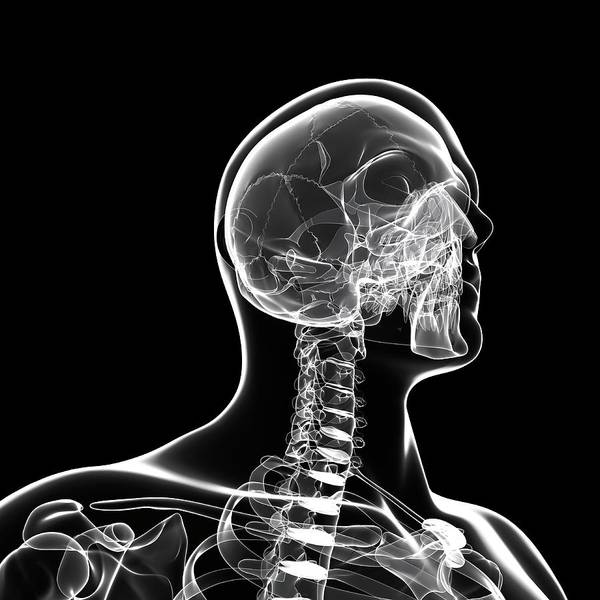 Head And Shoulders Photograph - Human Skeleton by Pixologicstudio/science Photo Library