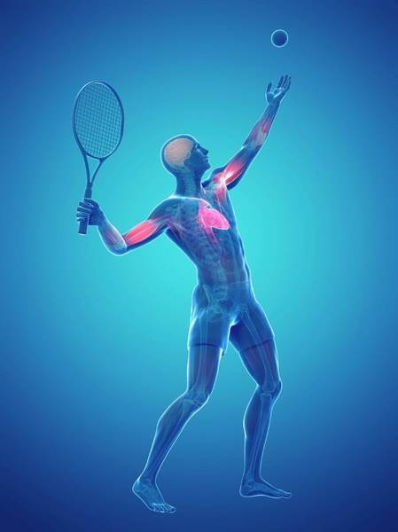 Wall Art - Photograph - Tennis Player by Sciepro/science Photo Library