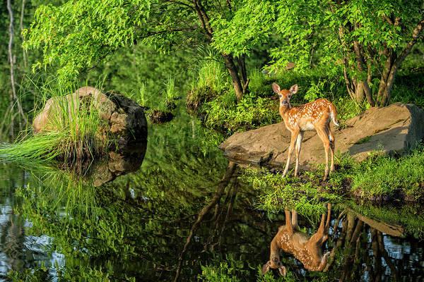 White Tailed Deer Photograph - Usa, Minnesota, Sandstone, Minnesota by Rona Schwarz
