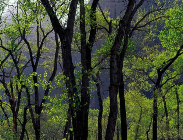 Similar Photograph - Zion National Park, Utah by Scott T. Smith