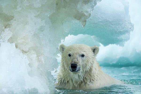 Alert Photograph - Canada, Nunavut Territory, Repulse Bay by Paul Souders