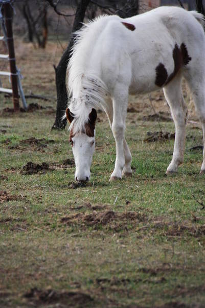 Wall Art - Photograph - Paint Filly by Thea Wolff