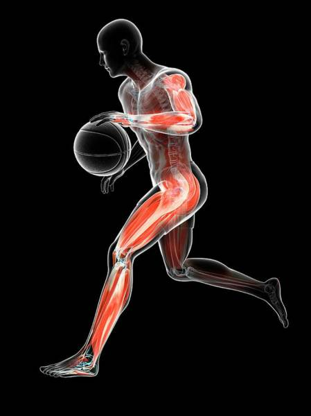 Wall Art - Photograph - Basketball Player by Sciepro/science Photo Library