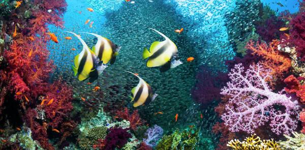 Underwater Scene Photograph - Coral Reef Scenery by Georgette Douwma