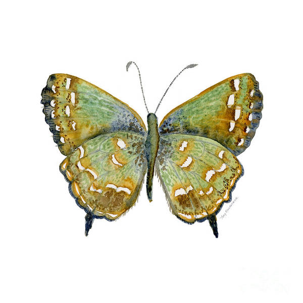 Painting - 38 Hesseli Butterfly by Amy Kirkpatrick