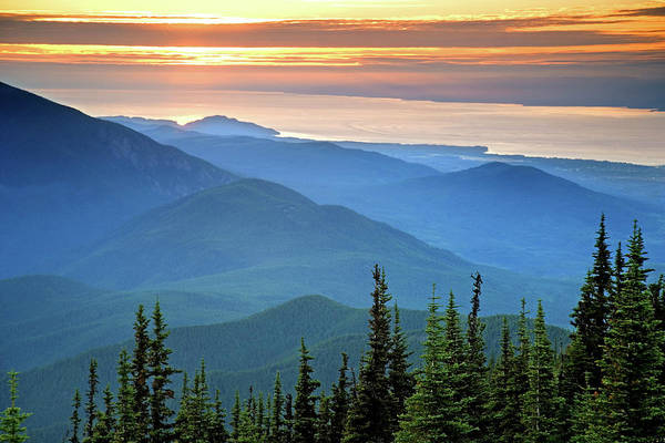 Conifer Photograph - Usa, Washington, Olympic National Park by Jaynes Gallery