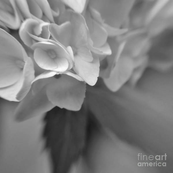Wall Art - Photograph - Abstract Flower by Chet B Simpson