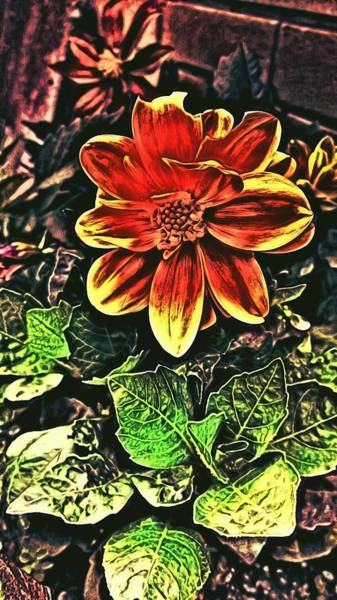 Abstract Flowers Wall Art - Photograph - Abstract Flowers by Chris Drake