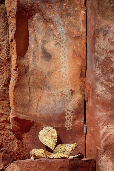 Wall Art - Photograph - Arizona, Coconino National Forest by Jamie and Judy Wild