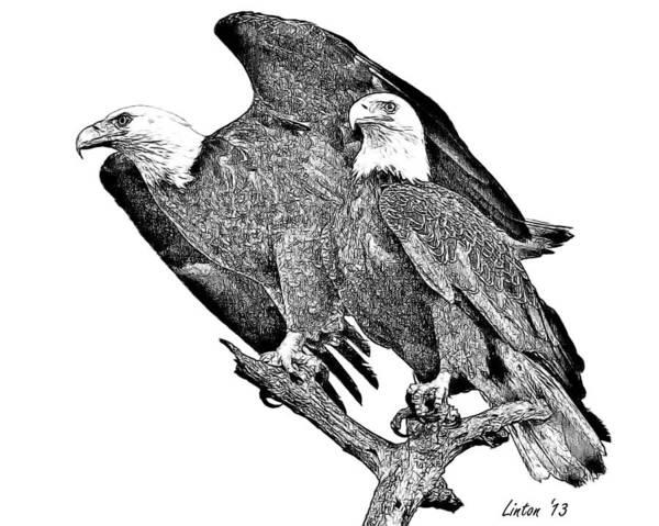 Digital Art - Bald Eagle Pair by Larry Linton