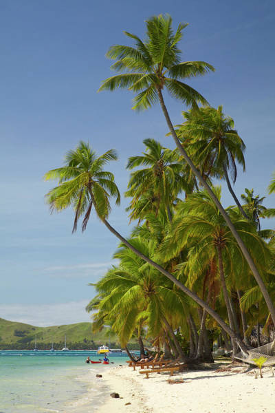 Foreshore Photograph - Beach And Palm Trees, Plantation Island by David Wall