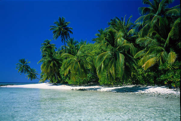 Ocean Grove Photograph - Beach Scene The Maldives by Panoramic Images