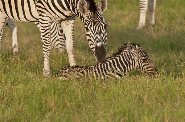 Stoney Photograph - Botswana, Africa by Jan and Stoney Edwards