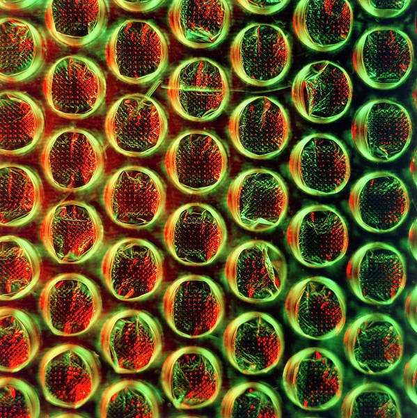 Wall Art - Photograph - Bubble Film Made From Polyethylene by Dr Jeremy Burgess/science Photo Library