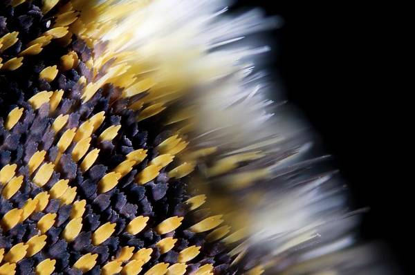 Wall Art - Photograph - Butterfly Wing Scales by Petr Jan Juracka
