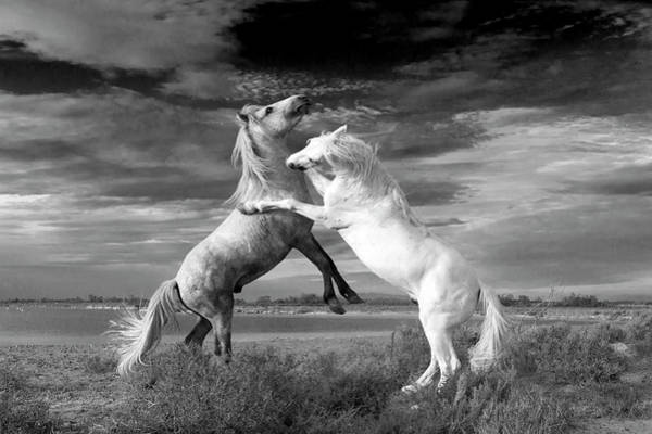 Wall Art - Photograph - Camargue Horses by Dr P. Marazzi/science Photo Library