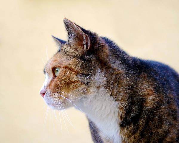 Photograph - Cat by Larah McElroy