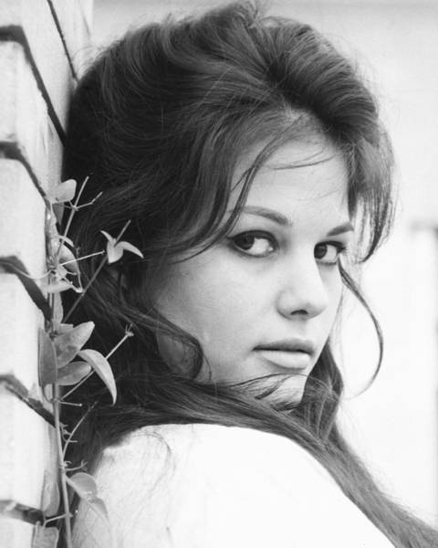Glamorous Photograph - Claudia Cardinale by Silver Screen