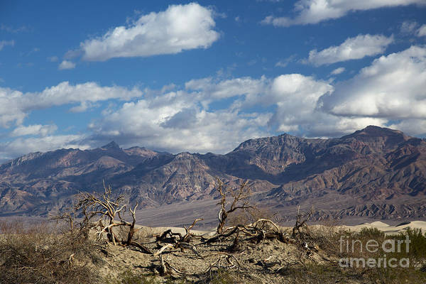 Photograph - Death Valley by Jim West