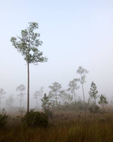 Photograph - Early Morning Fog Landscape-5 by Rudy Umans