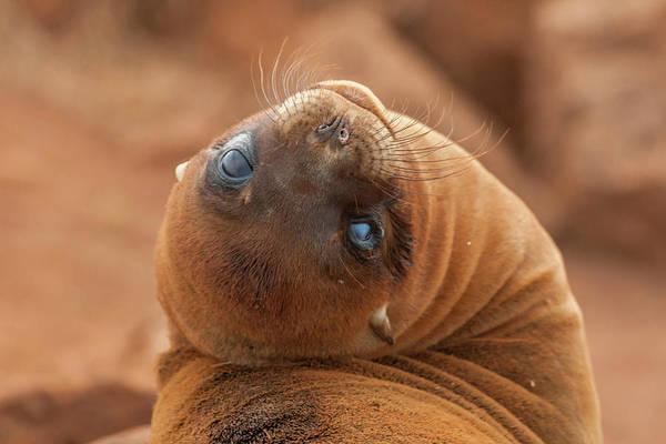 North Seymour Island Photograph - Ecuador, Galapagos National Park by Jaynes Gallery