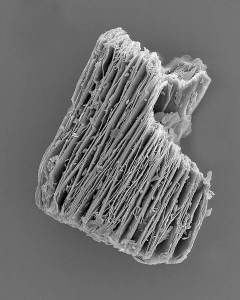 Wall Art - Photograph - Expanded Vermiculite Pellet by Dennis Kunkel Microscopy/science Photo Library