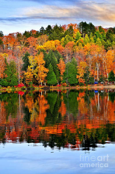 Wall Art - Photograph - Fall Forest Reflections by Elena Elisseeva