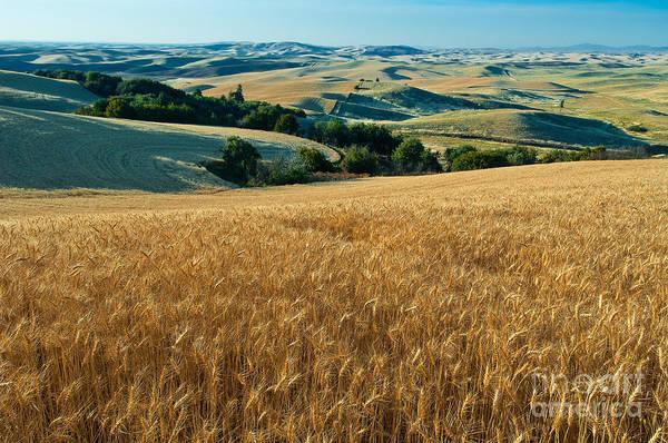 Photograph - Farm Field by John Shaw