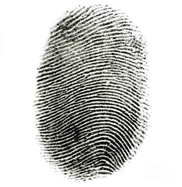 Photograph - Fingerprint by Photo Researchers Inc