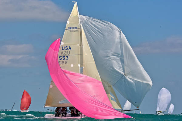 Photograph - Florida Regatta by Steven Lapkin