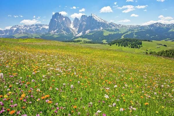 Alpine Meadows Photograph - Flowery Alpine Meadow by Bob Gibbons
