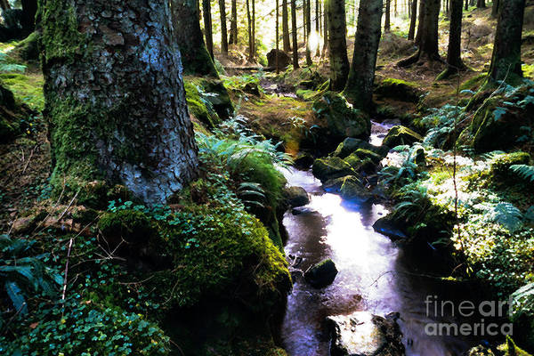 Gaelic Photograph - Gortin Glen Forest Park by Thomas R Fletcher