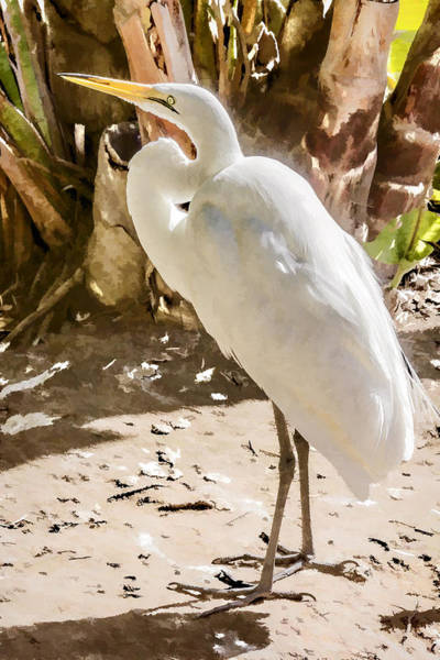 Digital Art - Great Egret by Photographic Art by Russel Ray Photos