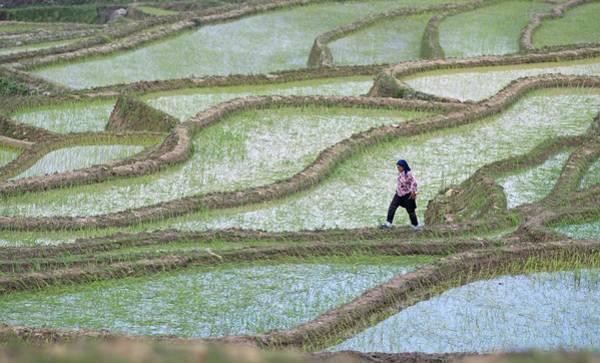Ethnic Minority Photograph - Hani Rice Terraces Near Yuanyang by Tony Camacho
