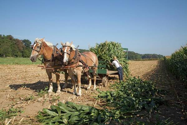 Harvest On An Amish Farm Art Print by Jim West
