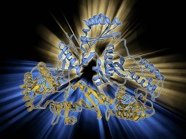 Syndrome Wall Art - Photograph - Hiv Reverse Transcription Enzyme by Laguna Design
