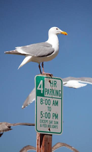 Photograph - 4 Hour Parking by E Faithe Lester