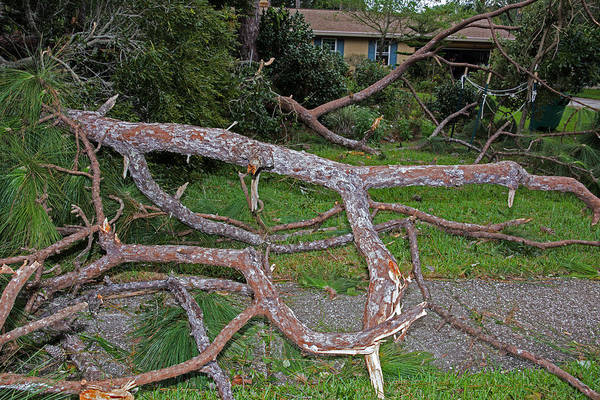 Hurricane Irma Residential Storm Damage Art Print by Millard H. Sharp