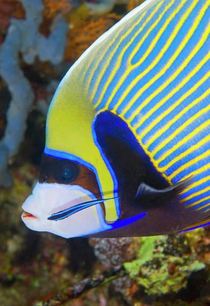 Animal Behavior Photograph - Indian Ocean, Indonesia, Komodo by Jaynes Gallery