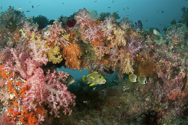 Boo Wall Art - Photograph - Indonesia, Papua, Raja Ampat by Jaynes Gallery