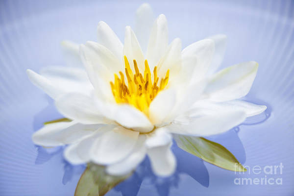 Lotus Pond Photograph - Lotus Flower by Elena Elisseeva