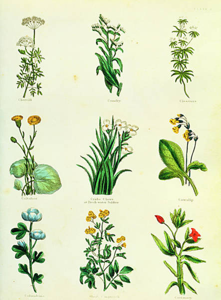 Wall Art - Photograph - Medicinal Herbs by Sheila Terry/science Photo Library
