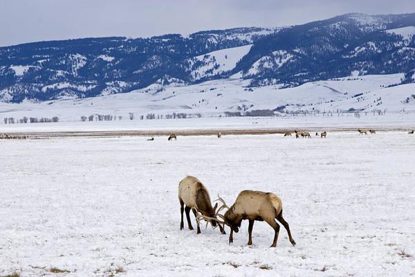 Photograph - National Elk Refuge by Jim West