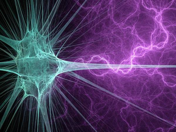 Dendrite Wall Art - Photograph - Nerve Cell by Laguna Design/science Photo Library