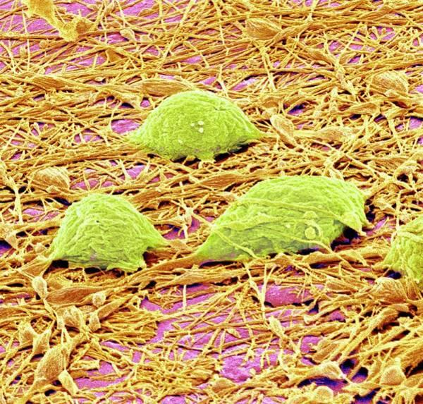 Neuron Wall Art - Photograph - Nervous System Cells by Susumu Nishinaga