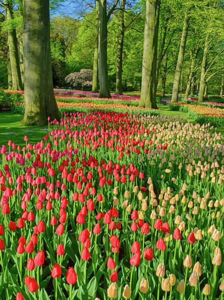Keukenhof Wall Art - Photograph - Netherlands, Lisse, Keukenhof Gardens by Terry Eggers