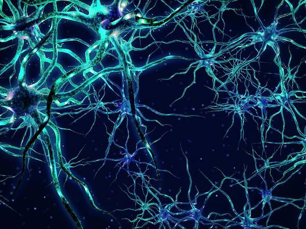 Nerve Cell Photograph - Neural Network by Maurizio De Angelis