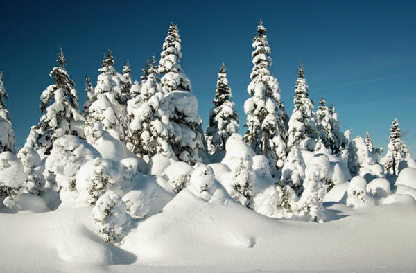 Cabot Trail Photograph - North America, Canada, Nova Scotia by Patrick J. Wall