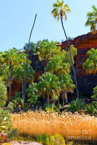 Wall Art - Photograph - Palm Valley  by Bill  Robinson
