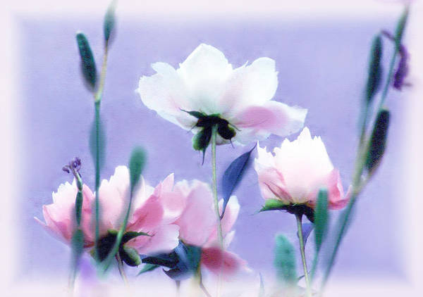 Photograph - Pastel Peony Petals by Jessica Jenney
